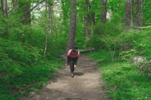 Photo of a hiker on a wide path in the woods